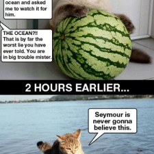 Seymour... the watermelon!