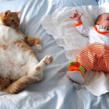 Sleeping cats [18 photos]