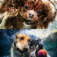 Underwater dogs! [17 photos]