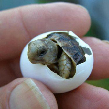 Just a baby turtle
