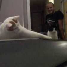Cats Try to Understand Treadmill