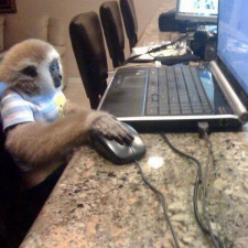 On the internet no one knows you are a monkey. No one.