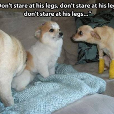 Don't stare at his legs