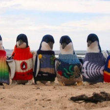 Penguins on Phillip Island are way cool