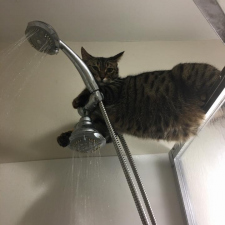 You taking a shower? That's cool.