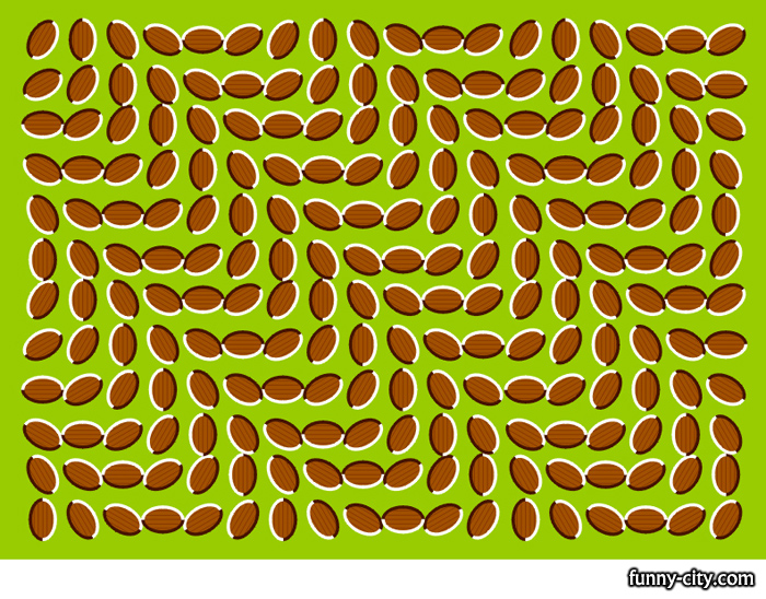 <p>What a weird picture... it doesn't move at all! But it does!</p>